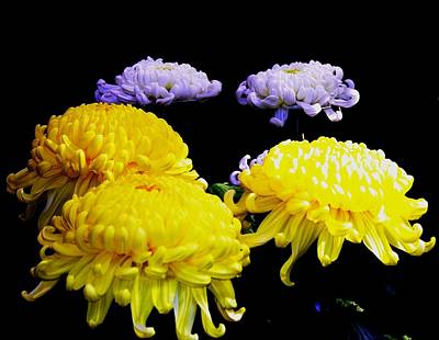Photograph - National Flower Of Japan by Jacqueline M Lewis