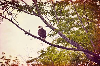 Photograph - National Symbol by JAMART Photography