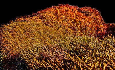 Photograph - Native Australian Shrubs by Miroslava Jurcik