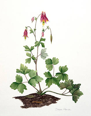 Painting - Native Columbine by Diane Harm