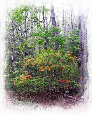 Photograph - Native Flame Azalea by Joe Duket