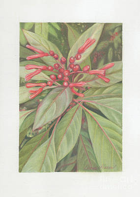 Painting - Native Florida Firebush by Diane Harm