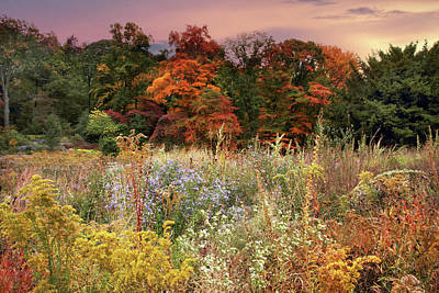 Photograph - Native Garden Sunset by Jessica Jenney