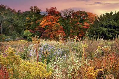 Photograph - Native Garden Sunset by Jessica Jenney