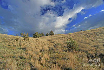Photograph - Native Grass by Gary Wing