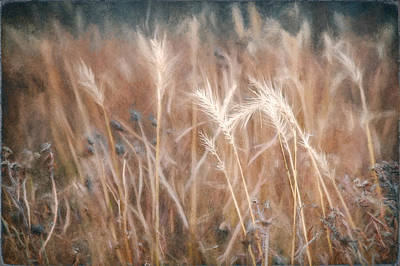 Overcast Photograph - Native Grass by Scott Norris