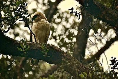 Photograph - The Golden 'io Hawaiian Hawk by Lehua Pekelo-Stearns