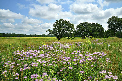 Photograph - Native Illinois Prairie by Ray Mathis