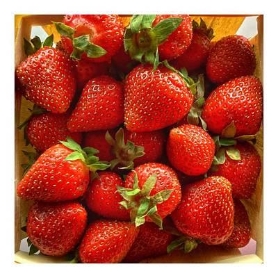 Photograph - Native Maine Strawberries by Patricia E Sundik