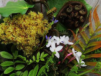 Photograph - Native New Zealand Bouquet 2 by Dianne  Connolly