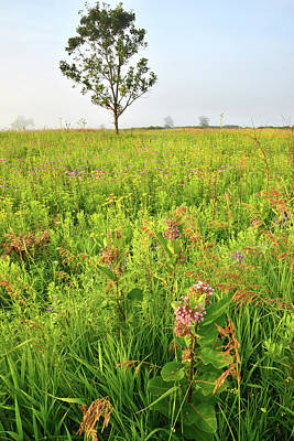 Photograph - Native Prairie In Chain-o-lakes State Park by Ray Mathis