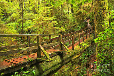 Photograph - Native Timber Walkway by Adam Jewell