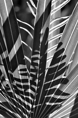 Photograph - Natural 10 17c by John Hintz