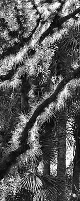 Photograph - Natural 10 17d by John Hintz