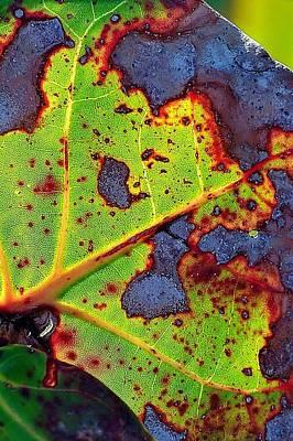 Photograph - Natural 11 17b by John Hintz