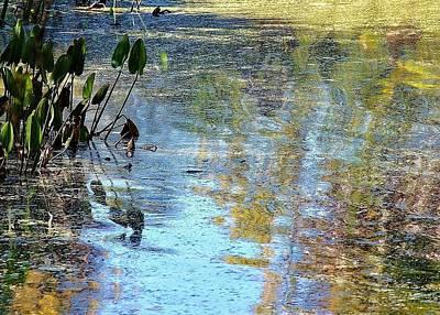 Photograph - Natural 2 16e by John Hintz