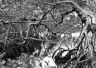 Photograph - Natural 3 17d by John Hintz