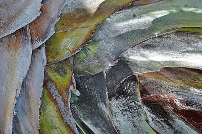 Natural 4 15 Art Print