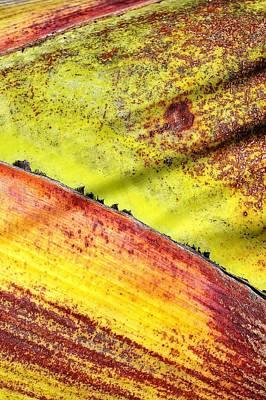 Photograph - Natural 2 17b by John Hintz