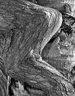 Photograph - Natural 4 17 by John Hintz