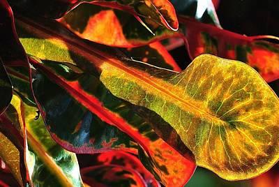 Natural 9 17c Art Print