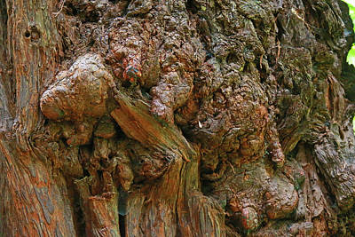 Photograph - Natural Abstract by Shoal Hollingsworth