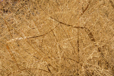 Photograph - Natural Abstracts - Intricate Shapes And Patterns In The Golden Grass by Georgia Mizuleva