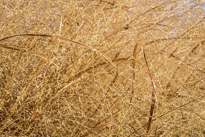 Photograph - Natural Abstracts - Sophisticated Shapes And Patterns In The Golden Grass by Georgia Mizuleva
