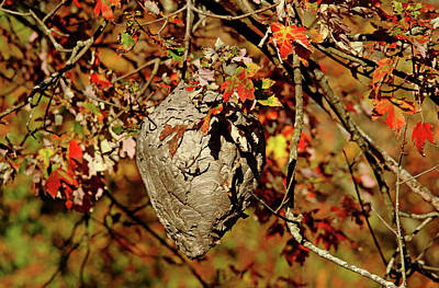 Photograph - Natural Architecture by Debbie Oppermann