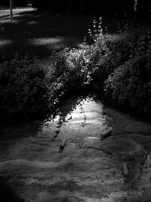 Photograph - Natural Art by Bailey Joyce