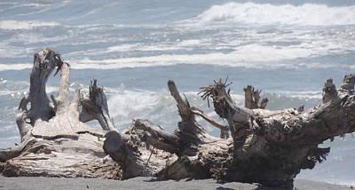 Agate Beach Oregon Photograph - Natural Beach Bench by Traci Hallstrom
