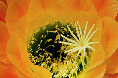 Natural Beauty Original by Arthur Bohlmann