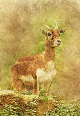 Gazelle Painting - Natural Beauty By Sarah Kirk by Sarah Kirk