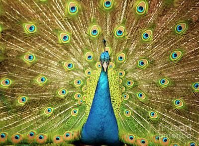 Photograph - Natural Beauty by Elaine Mikkelstrup