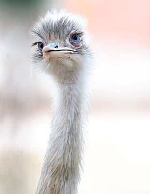 Ostrich Photograph - Natural Beauty by Fulvio Pellegrini