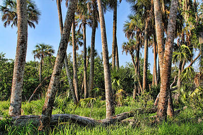 Photograph - Natural Beauty by HH Photography of Florida