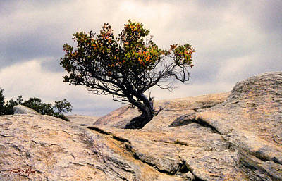 Photograph - Natural Bonsai by Frank Wilson