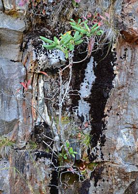 Photograph - Natural Bonsai On Rock by rd Erickson