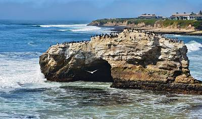 Natural Bridges Santa Cruz Art Print