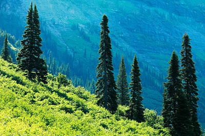West Glacier Photograph - Natural Colonnades by Todd Klassy