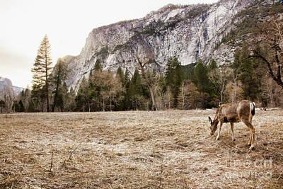 Photograph - Natural Deer Yosemite National Park  by Chuck Kuhn