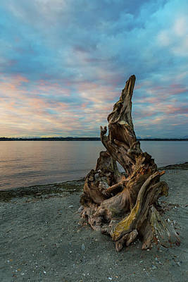 Outdoors Photograph - Natural Driftwood At Birch Bay State Park by David Gn