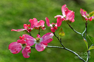 Photograph - Natural Floral by Paul Mashburn