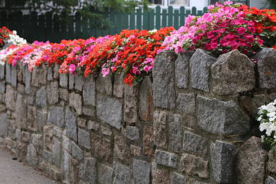 Photograph - Natural Floral Wall 2 by Living Color Photography Lorraine Lynch