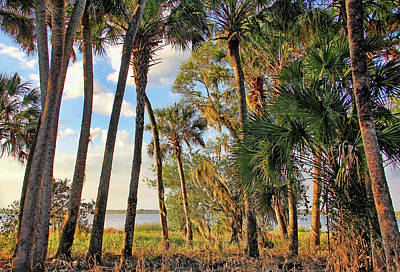 Photograph - Natural Florida by HH Photography of Florida