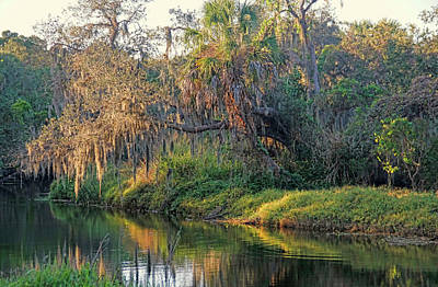 Photograph - Natural Florida Landscape by HH Photography of Florida