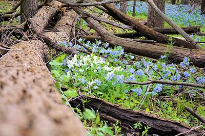 Photograph - Natural Flowerbed by Bonfire Photography
