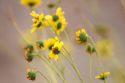 Photograph - Natural Flowers by Scott Sawyer
