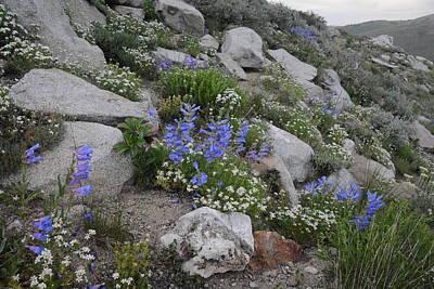 Photograph - Natural Garden by Jenessa Rahn