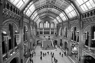 Photograph - Natural History Museum London 3 by Julia Gavin